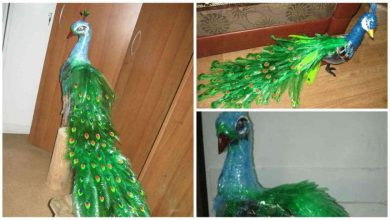 Peacock Design With Waste Plastic Bottles