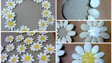 Daisies of seeds