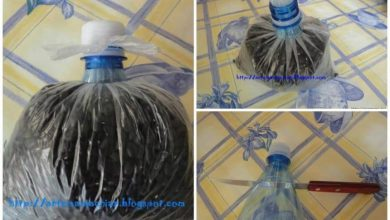The use of a plastic bottle for storage of cereals