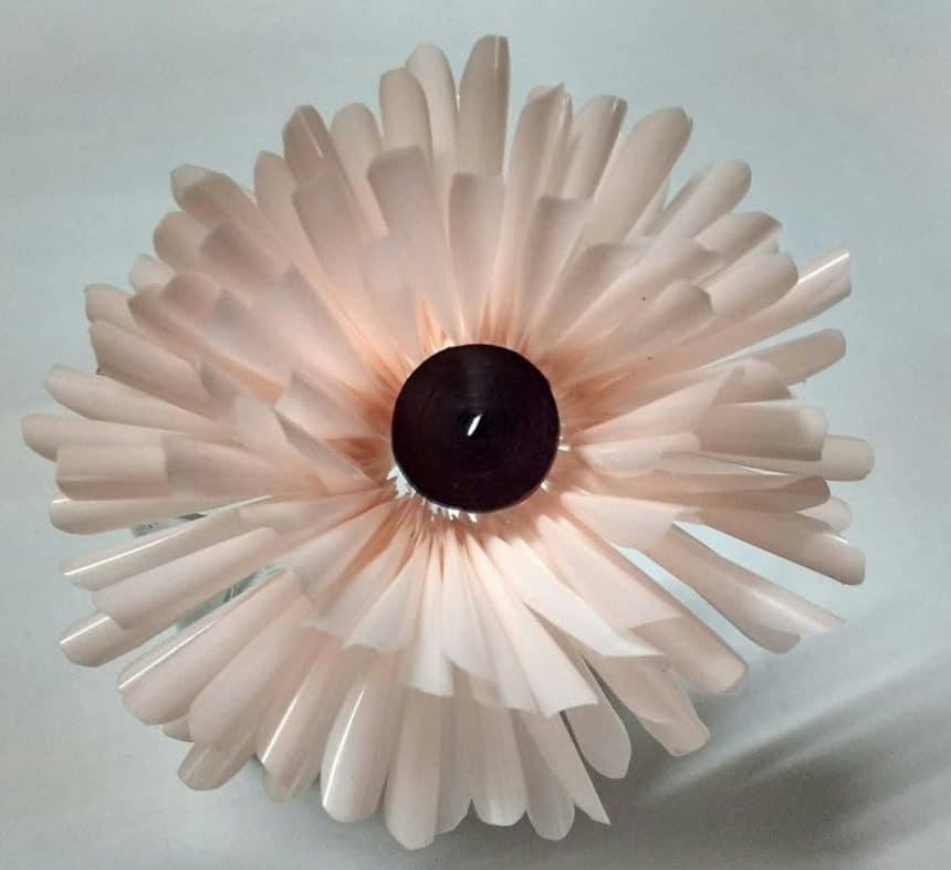 straw flower