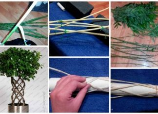 How to braid the trunk from trees