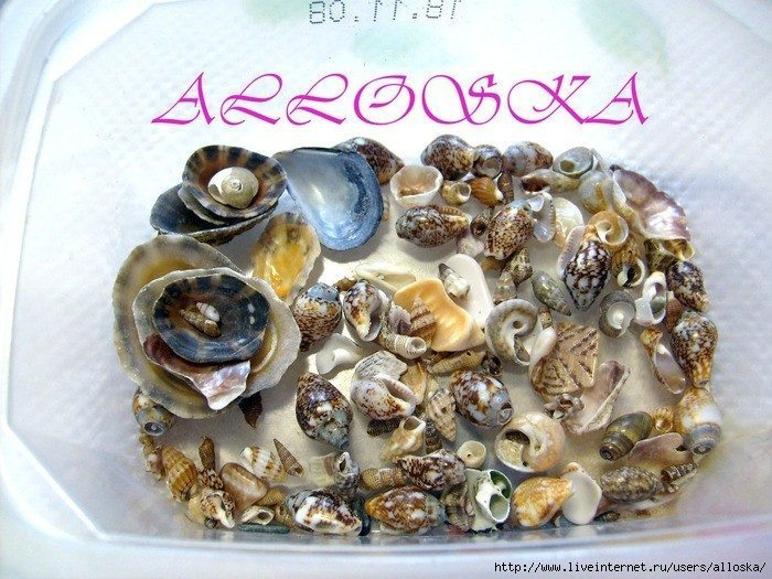 How to make ring with natural seashells(117)
