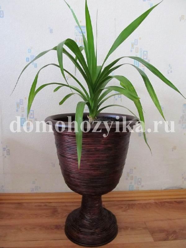 pot(220)