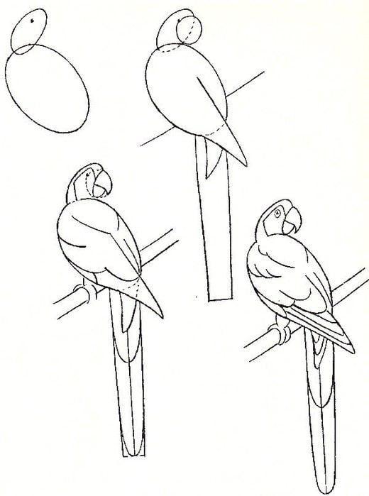 draw (4)
