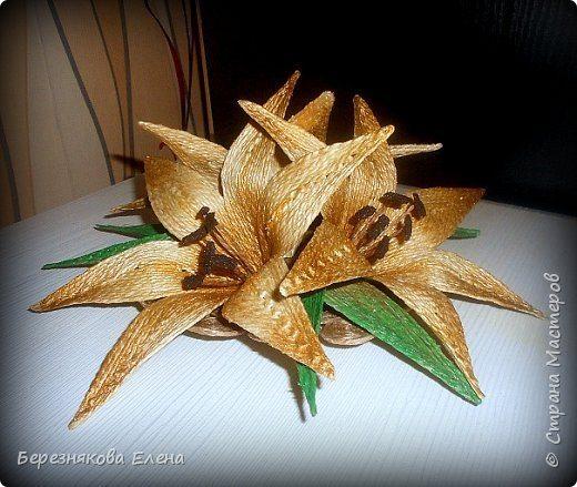 lilies (13)