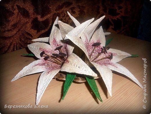 lilies (15)