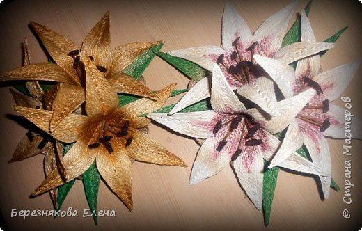 lilies (17)