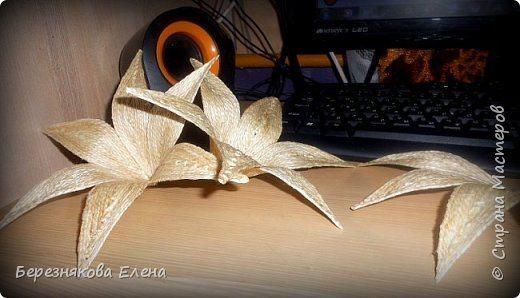 lilies (7)