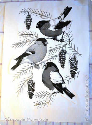 bullfinches (3)