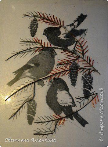 bullfinches (7)