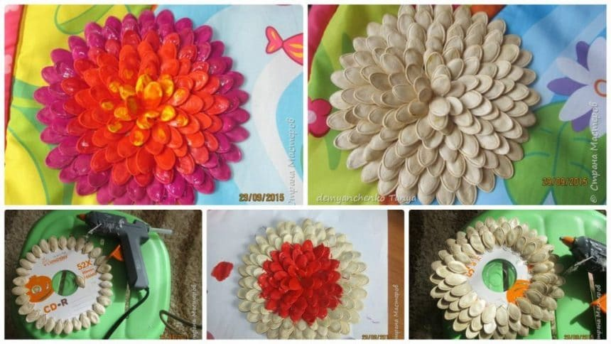 How to make dahlia from pumpkin seeds