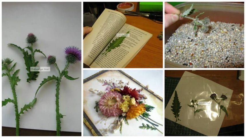 How to make dry plants for decoration
