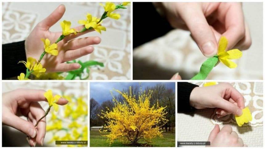 How to make forsythia flower