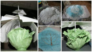 cabbage leaf organizer