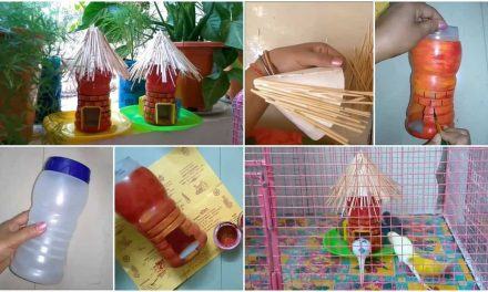 How to make bird feeder with plastic bottle