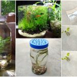 How to make bottle aquarium