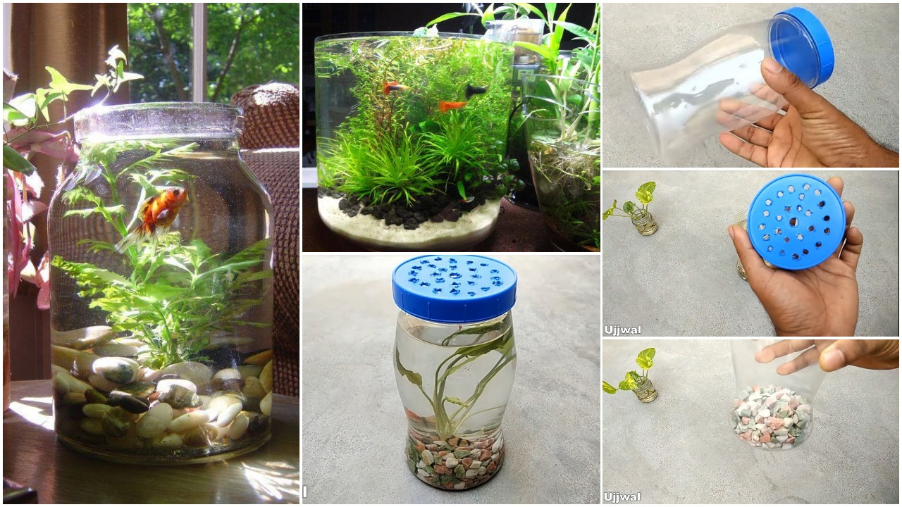 bottle aquarium